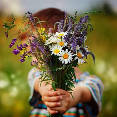 Boy holding out bunch of flowers daisies lavender
