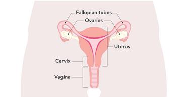 Causes Symptoms Jean Hailes